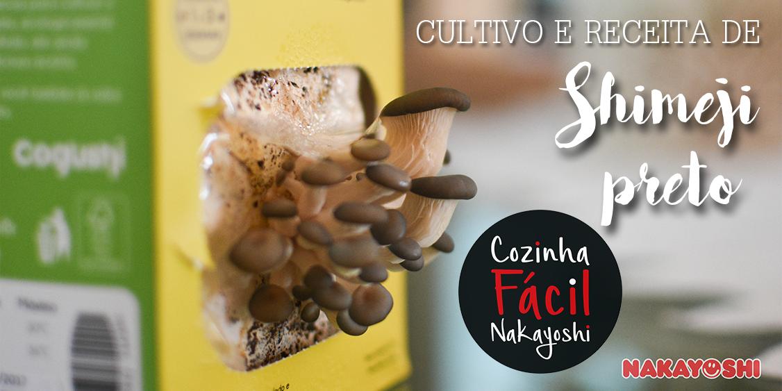 Cultivando o Cogushi de Shimeji Preto | Cozinha Fácil Nakayoshi #34